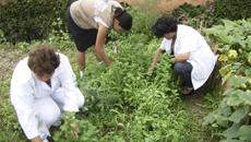 Projeto Colhendo Sustentabilidade incentivou práticas saudáveis em Embu das Artes