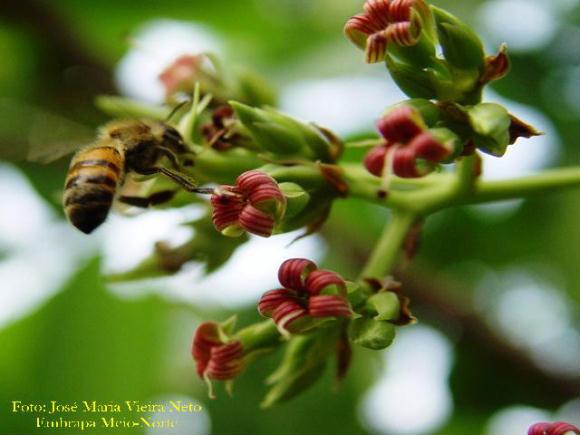 Estudos mostram que uso de agrotóxicos reduz populações de abelhas.