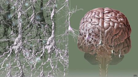 Processo de morte das células do cérebro tem início entre dez e 15 anos antes de que os problemas de memória se tornam aparentes.