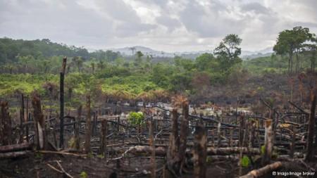 Reflorestamento pode ser chave para gerações futuras.