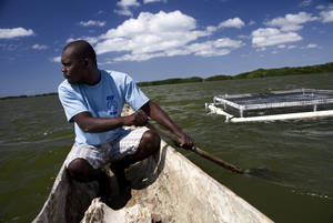 Um agricultor em sua fazenda: trabalho conjunto da FAO e do Brasil para promover aquicultura no Caribe e outras regiões. Photo: ©FAO/Luca Tommasini.