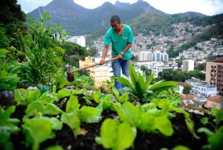 FAO e Brasil promovem projetos de alimentação na América Latina e Caribe e outras regiões. Foto: Agência Brasil/Tomaz Silva.