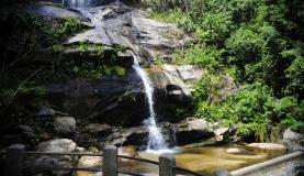 A floresta filtra a água da chuva para o subsolo. Foto: Tomaz Silva/Agência Brasil.