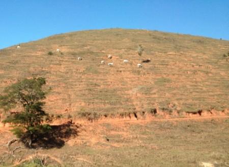 Pastagem degradada em pastoreio convencional no Sul do Espírito Santo: a situação mais comum!