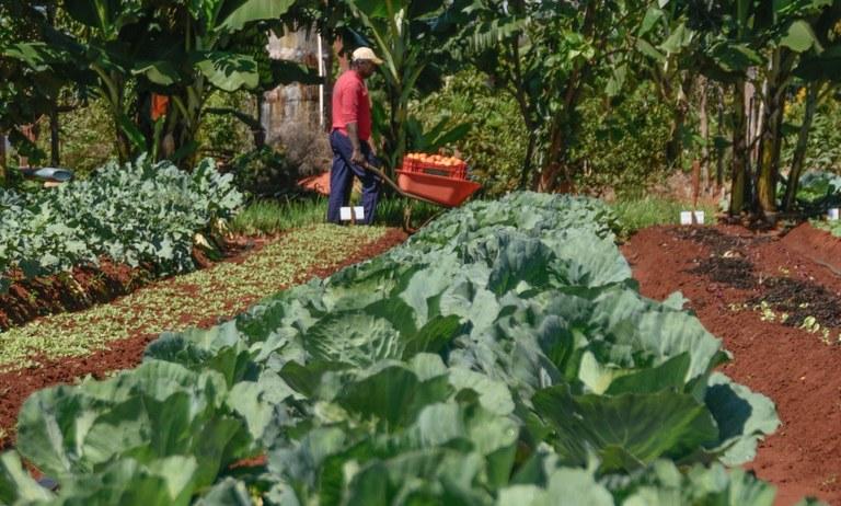 Área de produção orgânica no Brasil abrange 950 mil hectares. Foto: Portal Brasil / Iano Andrade.