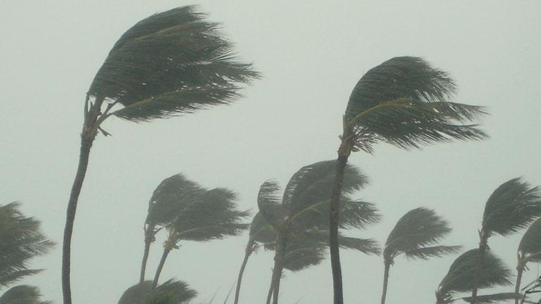 calentamiento-global-palmeras