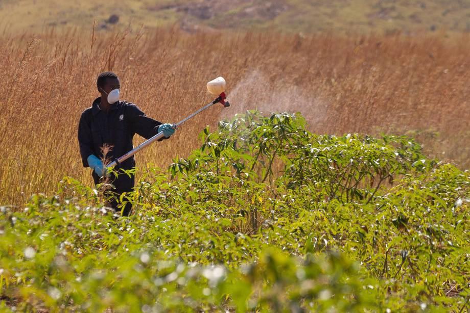 Jovem coloca pesticida em plantação. Foto: FAO