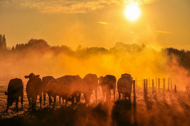 Segundo a OMM, 2016 está a caminho de se tornar o ano mais quente já registrado. Foto: OMM/Guillaume Louÿs .