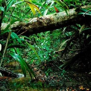 Floresta emite gases orgânicos.