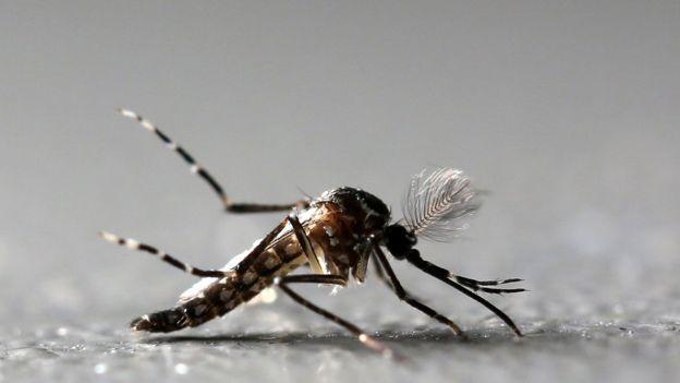 REUTERS - Especialistas temem que vírus chegue às cidades, onde poderia ser espalhado pelo Aedes aegypti, também transmissor de doenças como a dengue e a zika.