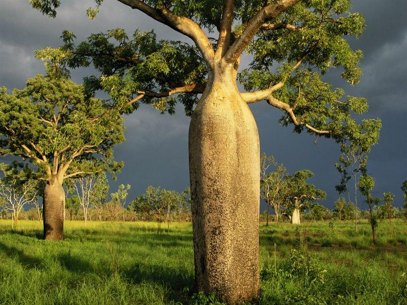 destruição das florestas no brasil
